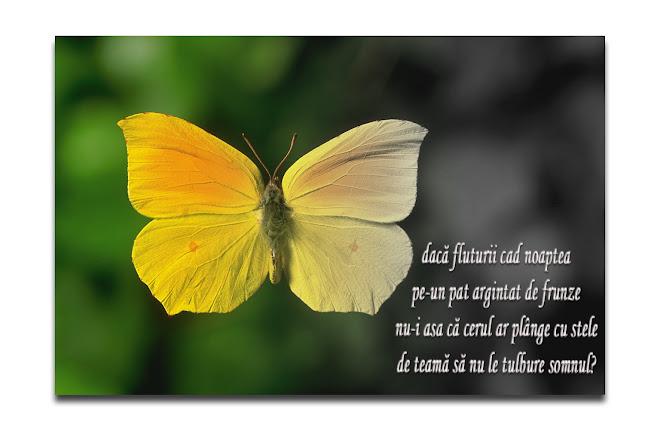O clipă de zbor inghețată-n aripi de fluture