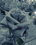flori...versurile naturii mai noi cu o vara, mai triste cu o toamna, mai vii cu o primavara..