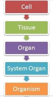 Rangkuman Pelajaran Sekolah Biology Life Organization