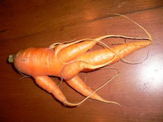 http://2.bp.blogspot.com/_DH5I1vdvuQU/SNp-ABYBuwI/AAAAAAAABas/UBv2pp2lmv0/s320/weird-carrot.JPG