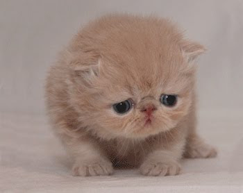 sad kitten