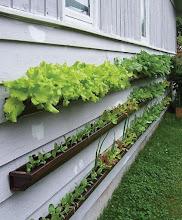 uma horta vertical