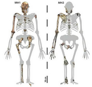 Homo Habilis Skeleton Structure Images & Pictures - Becuo