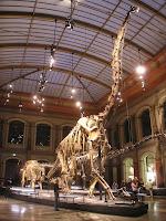 Dinosaure Brachiosaurus brancai