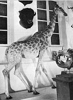 Girafe de Charles X