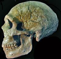 crâne de l'Homme de neandertal