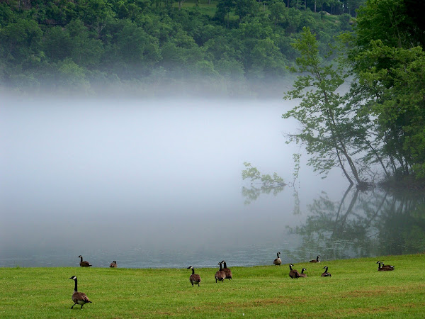 Foggy Ducks