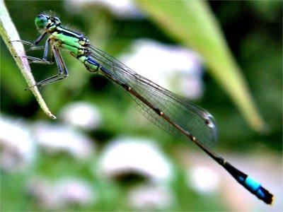 [dragonfly.jpg]