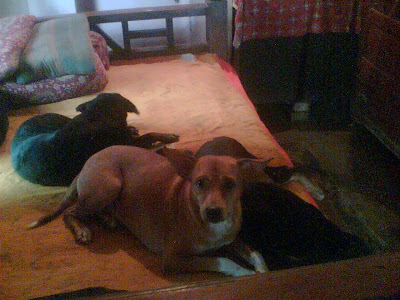 Image Result For Can Dogs Recover
