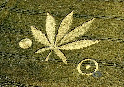 Crop Circles - Círculos en las Cosechas Crop-Circles-marijuana-leaf