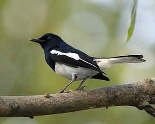 Phai Tam Bird Park