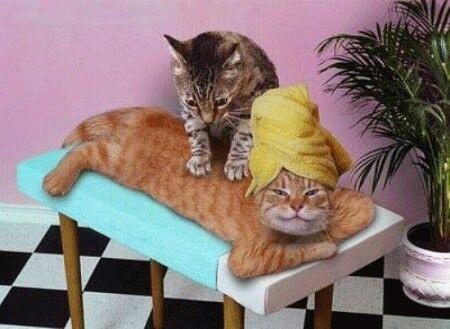 http://2.bp.blogspot.com/_DTGEcBi-w0g/S8H9LdjWxyI/AAAAAAAAAfc/1XffGo1MEVQ/s1600/Natural_Healing_Cats.jpg