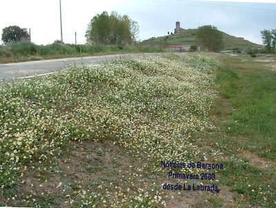 Mayo florido con Baraona al fondo