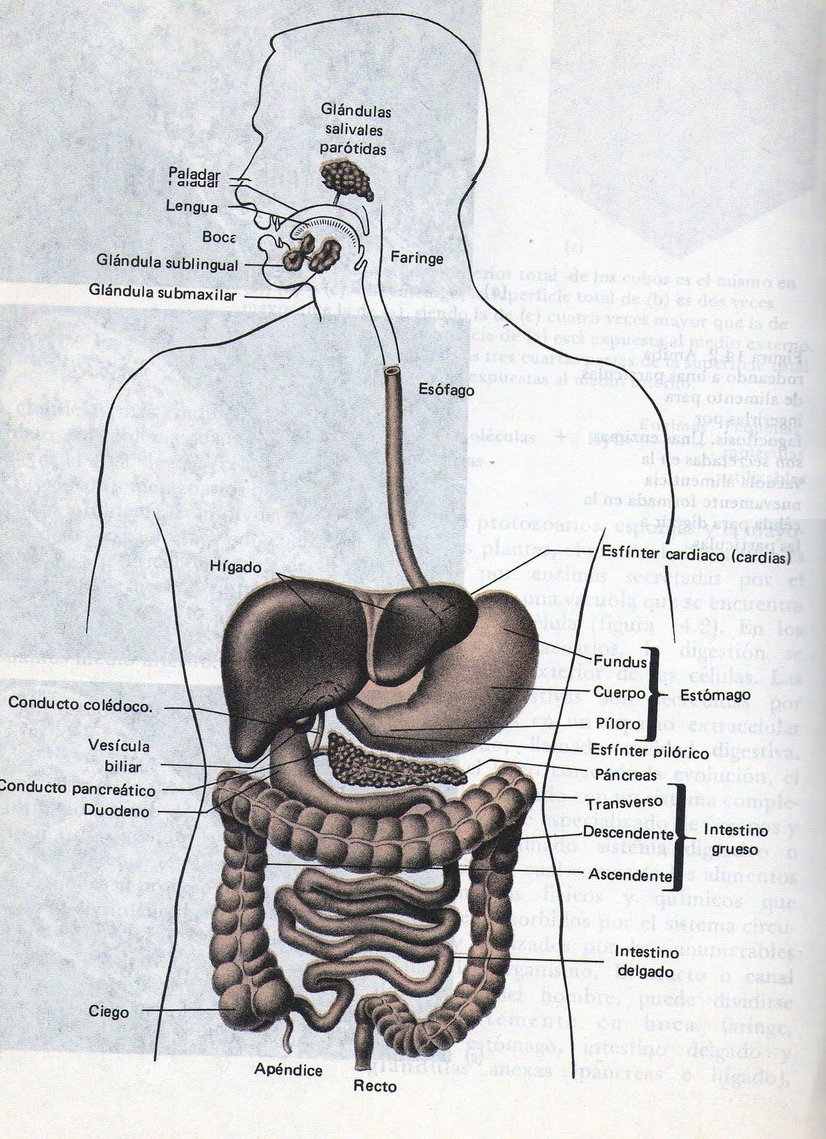 Biologia III y IV.: agosto 2010
