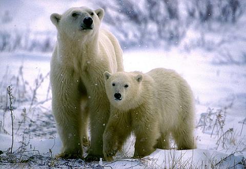 especie animal peligro extincion: