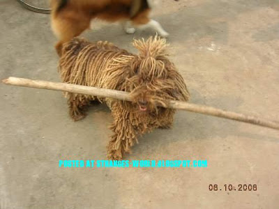 The Mop Dog @ strange pictures