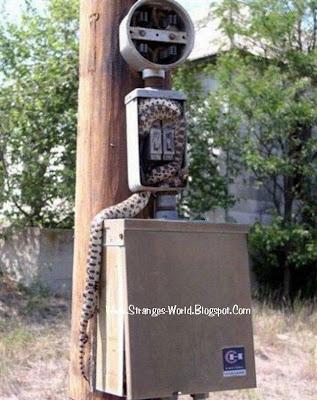 Unlucky Snake @ strange world