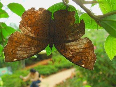 Livstræt sommerfugl