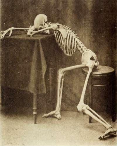 Albert Hasselwander: Ein Anatomischer Totentanz