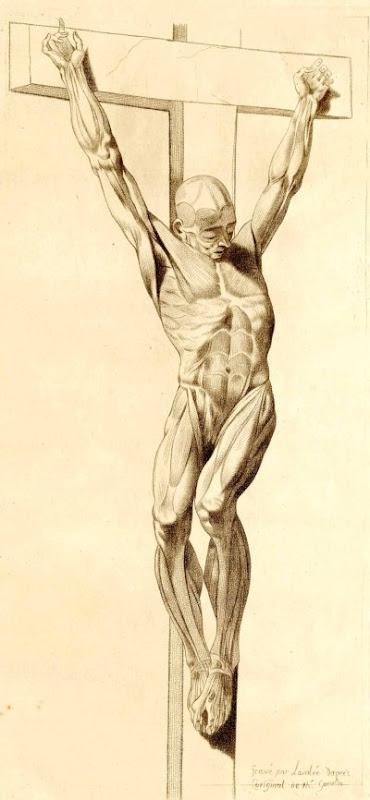 Anatomisk 'Jesus på korset'