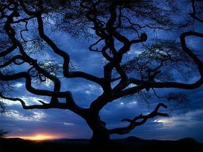 Træ med snoede grene