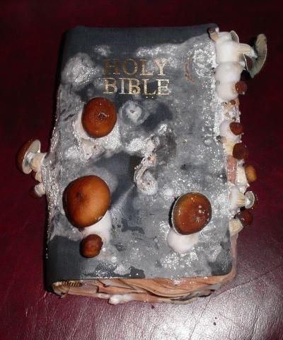 Muggen, rådden gammel bibel