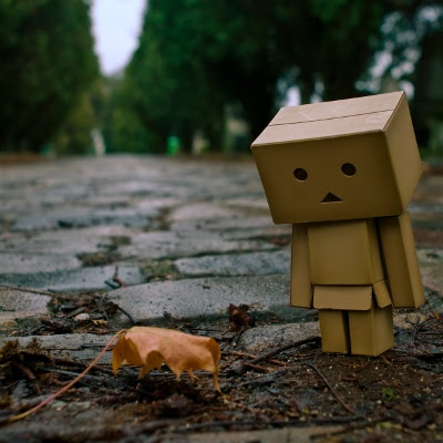 Danbo and autumn leaf