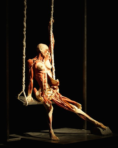 Gunther von Hagens: Girl on swing