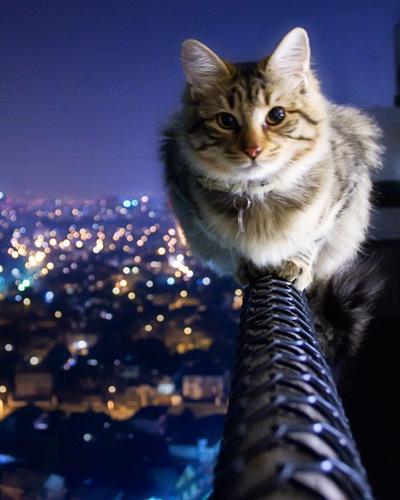 Kat på gelænder af høj altan