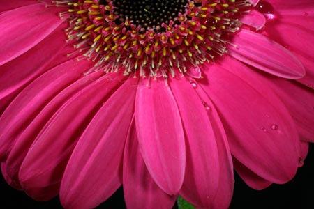 Hot pink flower pictures savingourboysfo pink flower background beautiful flower mightylinksfo