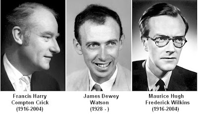 Image result for three scientists share nobel prize for dna in 1962 for   dna work