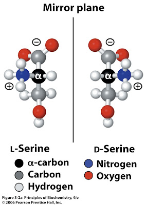 Amino acids racemization dating