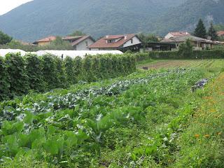 καλλιεργιες στην φαρμα
