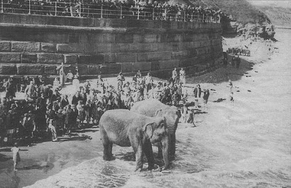ELEPHANTS ON WHITBY BEACH