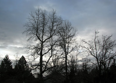 Winter Morning Trees, Portland, Oregon