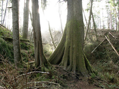 Astoria's Urban Forest and the Cathedral Tree Trail
