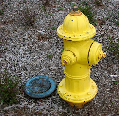 Yellow Fire Hydrant, Blue Meter Cover