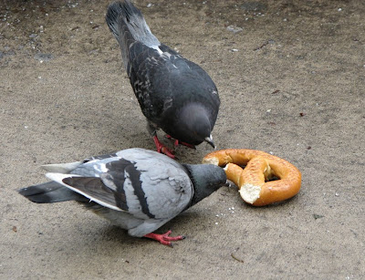 Pigeons with Bagel, New York