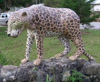 Roadside Jaguar, Brazil