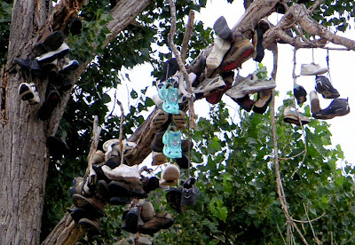 A shoe tree in Central Oregon near Mitchell