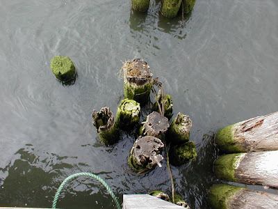 Pilings in the River