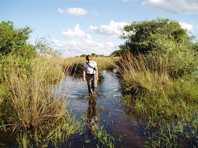 Patricia Medici looks for signs of tapirs in the Pantanal of Brazil.