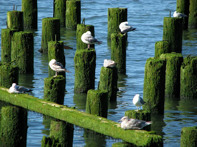 Seagull City