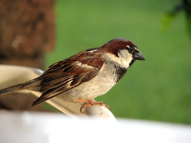 Bird, Maui