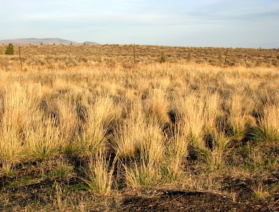 Grasslands of the High Desert, near Bend, Oregon