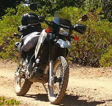 Once upon a time, there was this bear  in the road, and I was on this KLR...