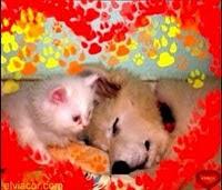 Conoce Mis Amores Animales