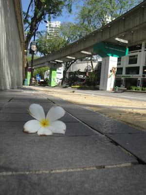 Floare tropicala Malaezia