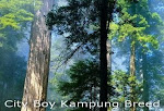 Visit  City Boy Kampung Breed Main Site Here