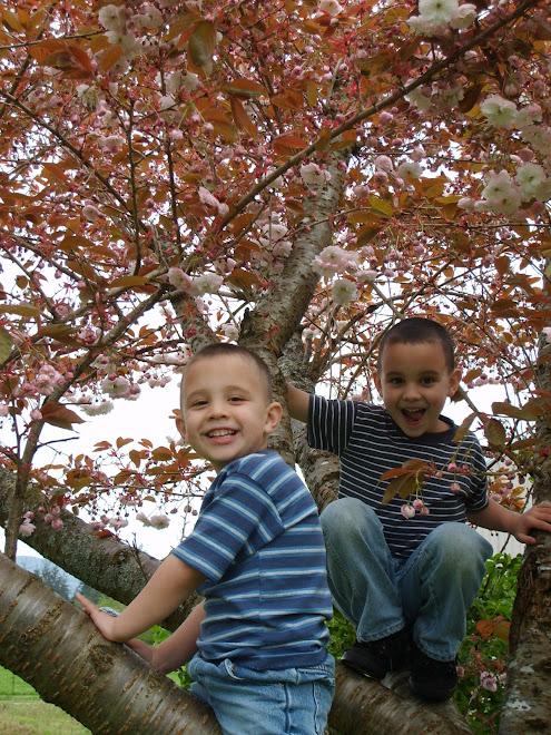 Tree Climbing...